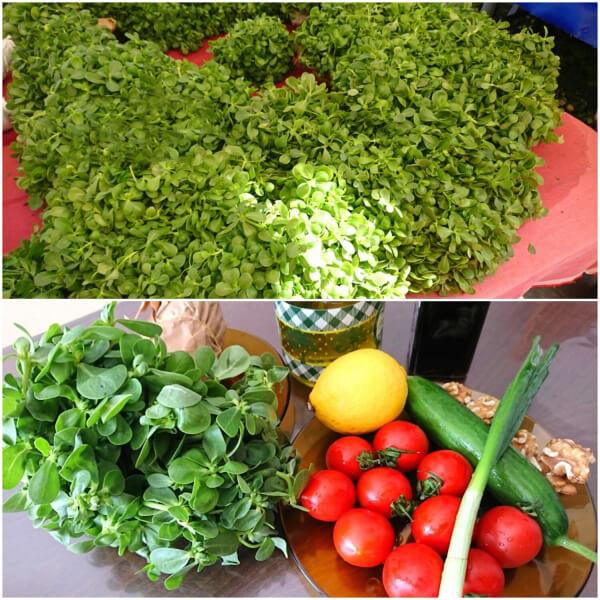 Frühlingssalat mit Portulak - Semizotlu Bahar Salatası